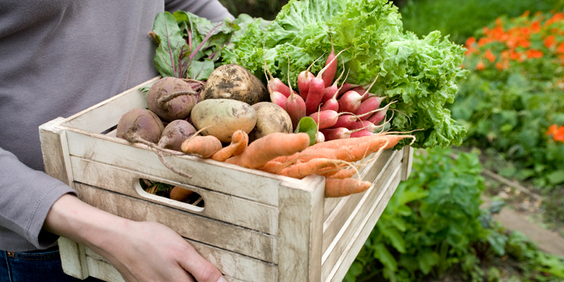 6 Reasons Why Should You Go In For Organic Food?